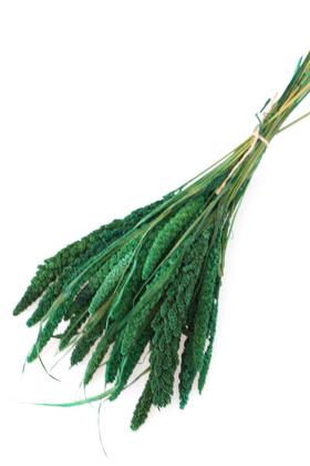 Yapay Çiçek Deposu - Şoklanmış Setteria Demeti 100gr Yeşil