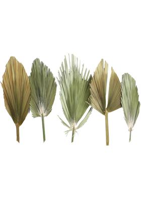 Yapay Çiçek Deposu - 5 Adet Kurutulmuş Gerçek Palmiye Yaprağı Büyük Boy