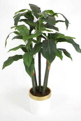 Yapay Çiçek Deposu - Yapay Kaliteli Ağaç 5 Gövdeli Massengena (Massengena Plant) 150 cm