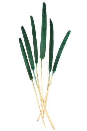 Yapay Çiçek Deposu - 6 Adet Doğal Kadife Dokulu Babala Kuru Bitki Yeşil
