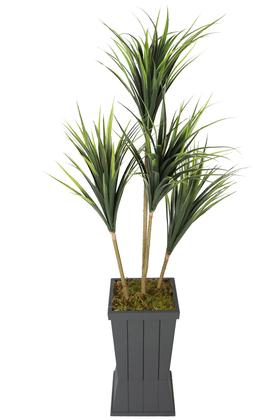 Yapay Çiçek Deposu - Ahşap Saksıda 4lü Yapay Yucca Ağacı 160 cm