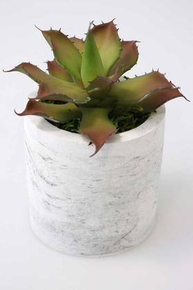Yapay Çiçek Deposu - Beton Saksıda Islak Büyük Succulent Echeveria Setosa Kahve-Yeşil