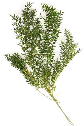 Yapay Çiçek Deposu - Şoklanmış Ruscus Aculeatus Kokina Naturel Açık Yeşil