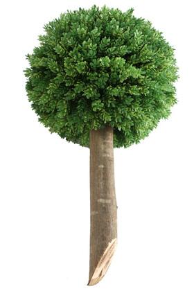 Yapay Çiçek Deposu - Ağaç Sap Takılı Dekoratif Lüx Şimşir Top Yeşil
