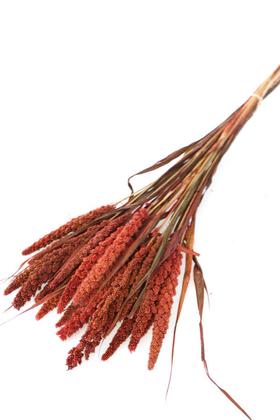 Yapay Çiçek Deposu - Şoklanmış Setteria Demeti 100gr Bordo