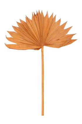 Yapay Çiçek Deposu - Kuru Tropic Palmiye Yaprağı 40 cm Turuncu