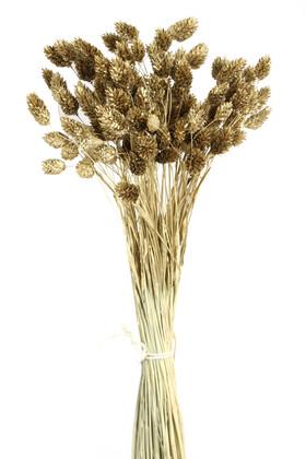 Yapay Çiçek Deposu - Kuru Çiçek Palaris Kuş Otu Gold