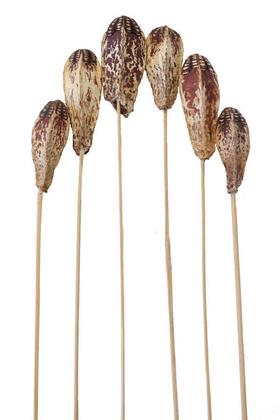 Yapay Çiçek Deposu - Tropic Kuru Çiçek 6lı Mehogony on Stem