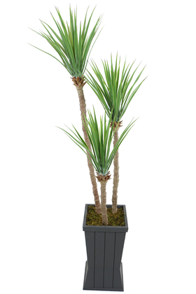 Yapay Çiçek Deposu - Gri Saksıda 3lü Yapay Yucca Ağacı 175 cm