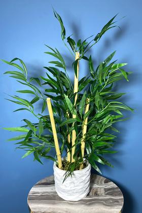 Yapay Çiçek Deposu - Beton Saksıda Bambu Ağacı Koyu Yeşil 65 cm (Yosunlu Model)