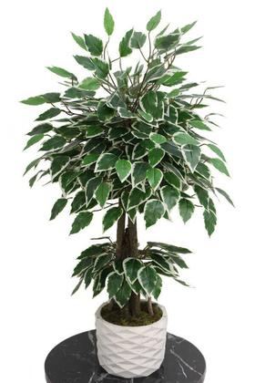 Yapay Çiçek Deposu - Beton Saksıda Mini Starlight Benjamin Ağacı 75 cm Yeşil-Beyaz