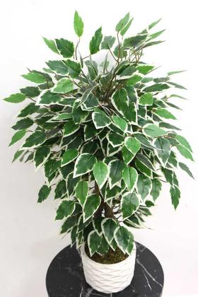 Beton Saksıda Mini Starlight Benjamin Ağacı 75 cm Yeşil-Beyaz - Thumbnail
