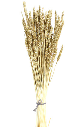 Yapay Çiçek Deposu - İthal Kuru Başak Demeti Gold