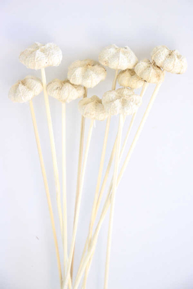 Yapay Çiçek Deposu - 10lu Paras Ped Bleach on Stem 45 cm Beyaz