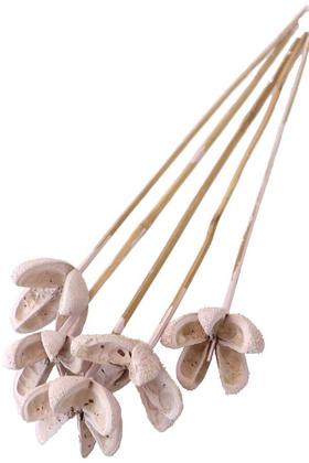 Yapay Çiçek Deposu - Tropic Bullet Flower Kuru Çiçek Tropik 5li Retro Pudra