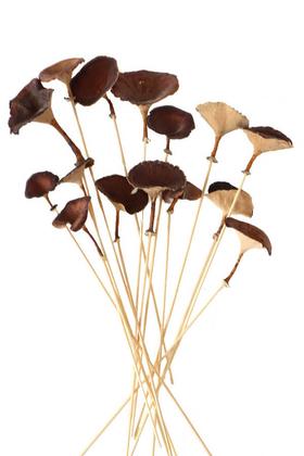 Yapay Çiçek Deposu - 15 Adet Kuru Golden Mushromm Bambu Çubuklu