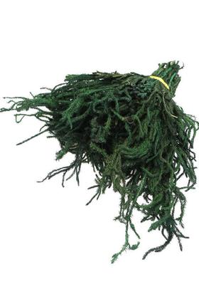 Yapay Çiçek Deposu - Teraryum Bitkisi Licopodium Kibrit Otu
