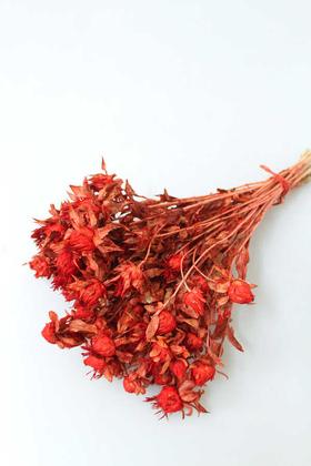 Yapay Çiçek Deposu - Kuru Çiçek Kartamus Açık Kırmızı
