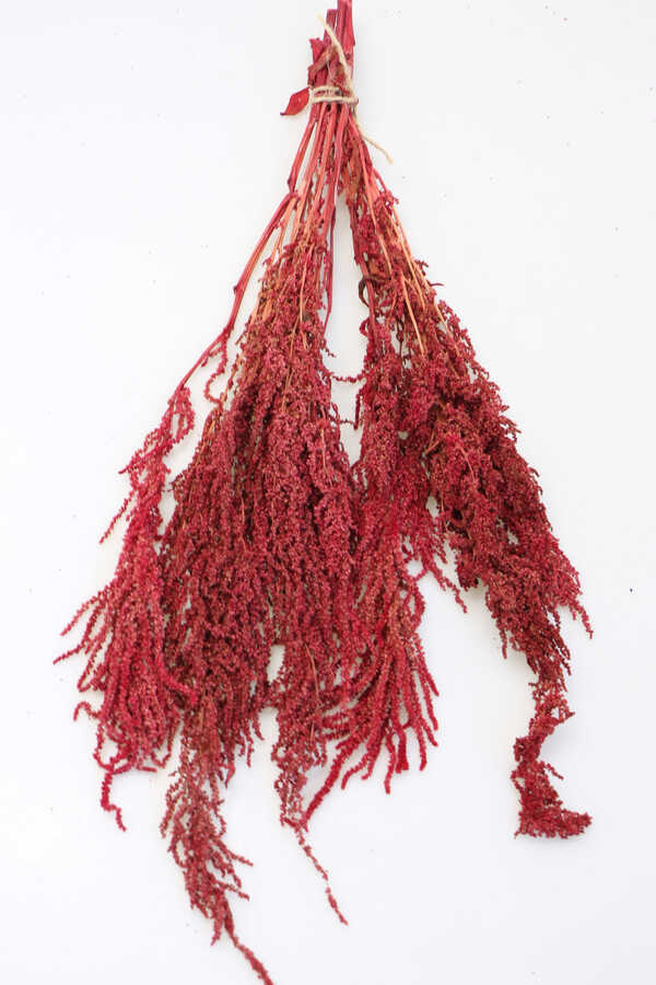Şoklanmış Sarkan Amaranthus Demeti 100 gr Mat Kırmızı