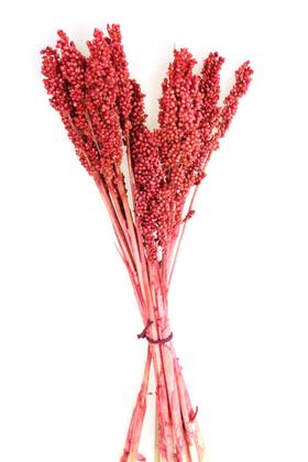 Yapay Çiçek Deposu - Kuru Çiçek Sorghum Otu 55 cm Kırmızı