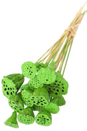 Yapay Çiçek Deposu - 20 Adet Bambu Şiş Saplı Mini Lotus Plant Retro Yeşil (Gerçek Lotus)