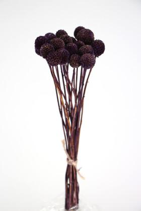Yapay Çiçek Deposu - Kuru Çiçek Craspedia Çiçeği 20 Adet Mor