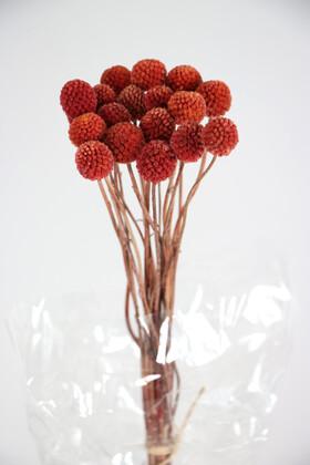 Yapay Çiçek Deposu - Kuru Çiçek Craspedia Çiçeği 20 Adet Kiremit