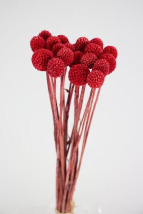 Yapay Çiçek Deposu - Kuru Çiçek Craspedia Çiçeği 20 Adet Kırmızı
