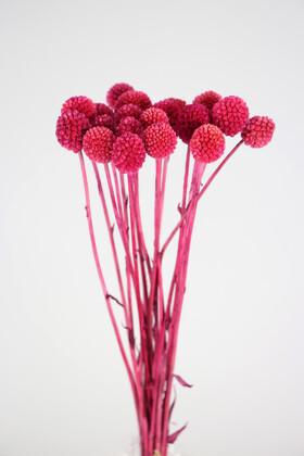 Yapay Çiçek Deposu - Kuru Çiçek Craspedia Çiçeği 20 Adet Pembe