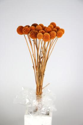 Yapay Çiçek Deposu - Kuru Çiçek Craspedia Çiçeği 20 Adet Turuncu