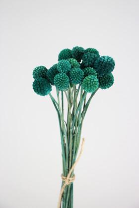 Yapay Çiçek Deposu - Kuru Çiçek Craspedia Çiçeği 20 Adet Yeşil