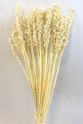 Yapay Çiçek Deposu - Kuru Çiçek Sorghum Otu 55 cm Krem