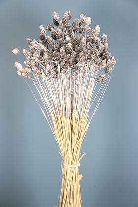 Yapay Çiçek Deposu - Kuru Çiçek Palaris Kuş Otu Gümüş