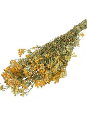 Yapay Çiçek Deposu - Kuru Çiçek Kuru Pıtırcık Papatya Çiçeği Naturel