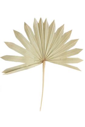 Yapay Çiçek Deposu - 4lü Kuru Tropic Palmiye Yaprağı 40 cm Naturel