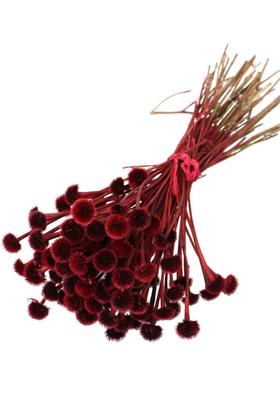 Yapay Çiçek Deposu - Kuru Çiçek Papatya Otu Demeti Kırmızı