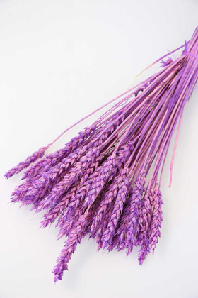 Yapay Çiçek Deposu - İthal Kuru Başak Demeti Lila-Mor