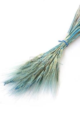 Yapay Çiçek Deposu - Kuru Başak Demeti Açık Mavi