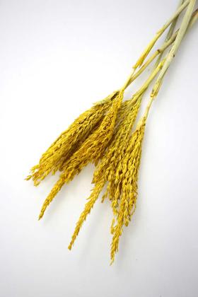 Yapay Çiçek Deposu - Kuru Çiçek Mısır Püskülü Demeti 50 cm Sarı