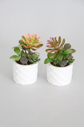 Yapay Çiçek Deposu - Mini Beton Saksıda Lotuslu Succulent 2li Set