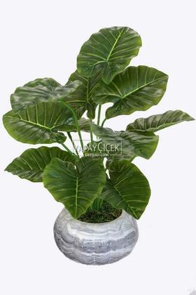 Yapay Çiçek Deposu - Beton Saksıda Difenbahya Bitkisi 40 cm Yeşil Damarlı Model