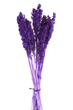 Yapay Çiçek Deposu - Kuru Çiçek Sorghum Otu 55 cm Mor