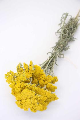 Yapay Çiçek Deposu - Kuru Çiçek Şemsiye Otu Demeti Doğal Sarı