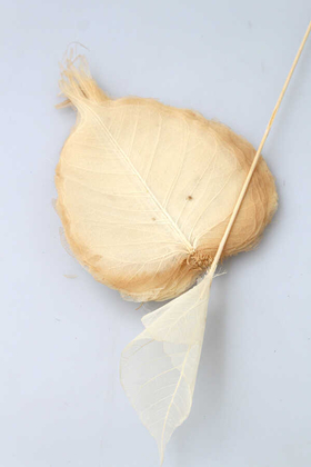 Yapay Çiçek Deposu - 40l Paket Kurutulmuş Skeleton Yaprağı beyaz