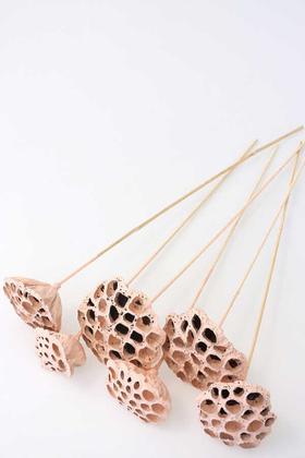 Yapay Çiçek Deposu - Succulent Lotus Plant Gerçek Lotus Çiçeği Bambu Saplı 6 Adet Açık Somon