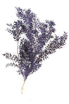 Yapay Çiçek Deposu - Şoklanmış Ruscus Aculeatus Kokina Mat Mor