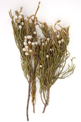 Yapay Çiçek Deposu - Doğal Brunia Çiçeği Demeti (Kod 621)