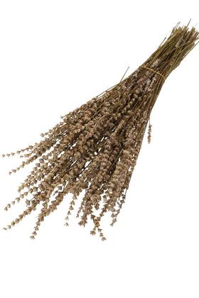 Yapay Çiçek Deposu - Şoklanmış Dökülmeye Dayanıklı Gerçek Lavanta Demeti Naturel (100 gr)