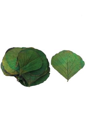 Yapay Çiçek Deposu - 25li Paket Şoklanmış Yaprak Cobra Leaf Grecol Yeşil