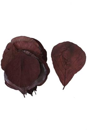 Yapay Çiçek Deposu - 25li Paket Şoklanmış Yaprak Cobra Leaf Grecol Kızıl Kahve